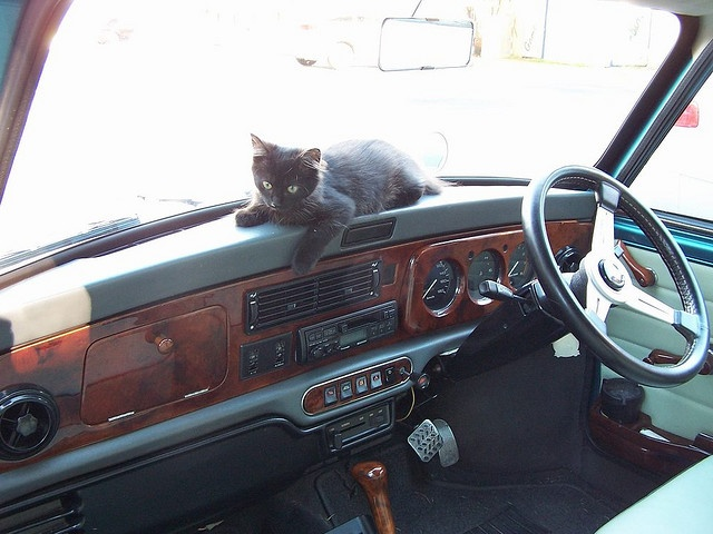 Kitten on Mini Dashboard  by Manuel Barje