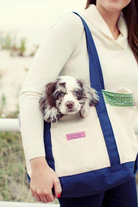 gottta take the baby: The Vineyard, Puppies, Small Dogs, Cutest Dogs, Prep Life, Australian Shepherd, Vineyard Vines, Cute Dogs, Animal