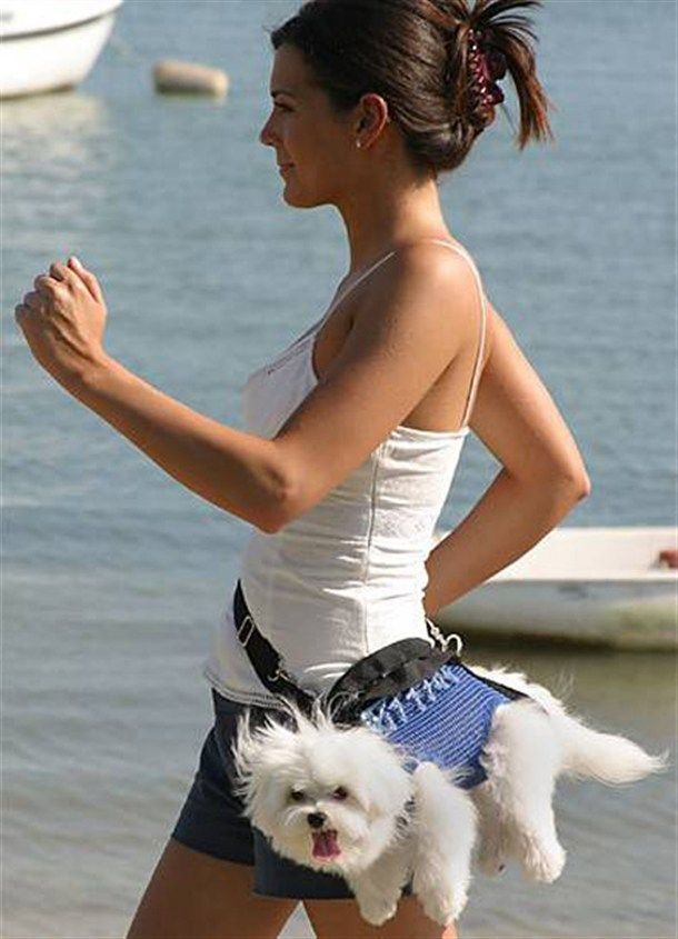 What is this crap?  Why not let the dog get some exercise too!  This just looks silly!