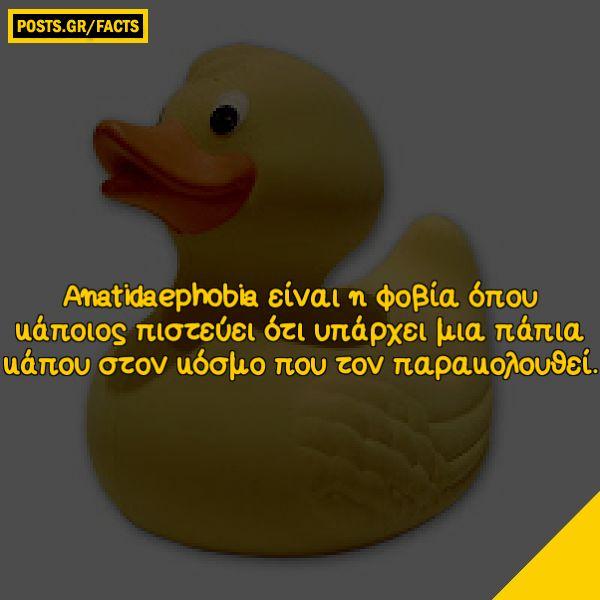 Anatidaephobia είναι η φοβία όπου κάποιος πιστεύει ότι υπάρχει μια πάπια κάπου στον κόσμο που τον παρακολουθεί.
