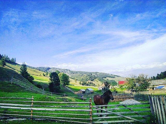 still life in the evening.  #2017 #july #harghita #mountains #wonderland #holiday #stilllife #sunset #landscape #horse #gotcaught #nature #happiness #rurallife #ruralphotography #mik #ikozosseg #instahun  #alwaysmore : @czigelbence -------- #transylvania #romaniamagica #theweekoninstagram #culture #vacation #explore #travel #discover #nature #passionpassport