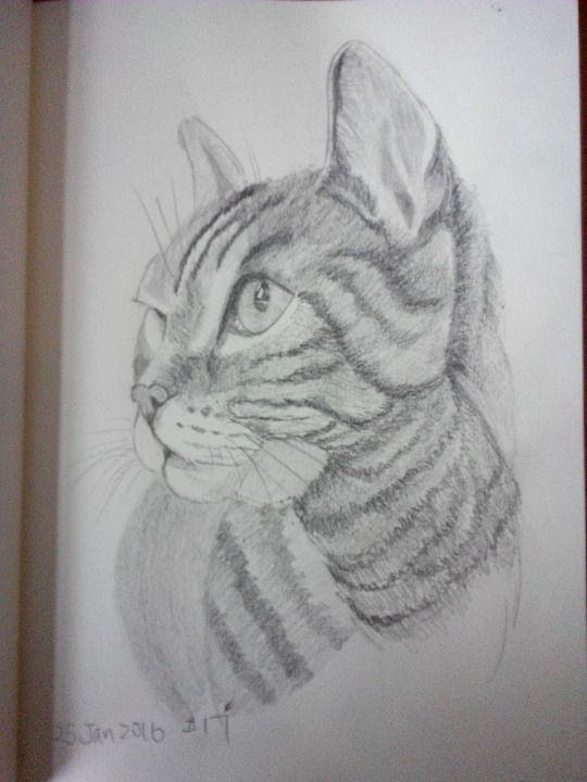 Cat sketching practice #017
