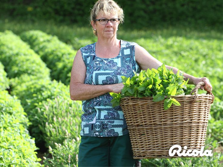 To ensure the herbs stay fresh, things must move very quickly after the harvest: The herbs must immediately be delivered to the production site. #Herbs #Field #Ricola