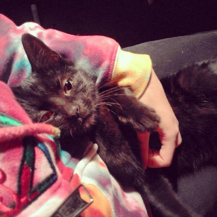 """""""She is black like my soul""""  Hah #tiedye #kitten #blackcats"""