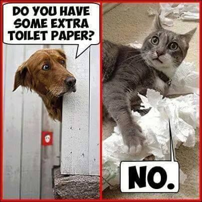 Do you have some extra toilet paper?