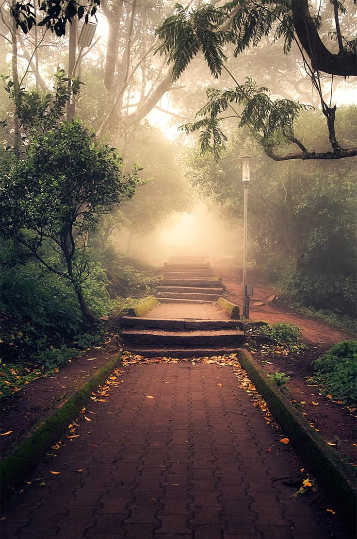 Pathway to the light