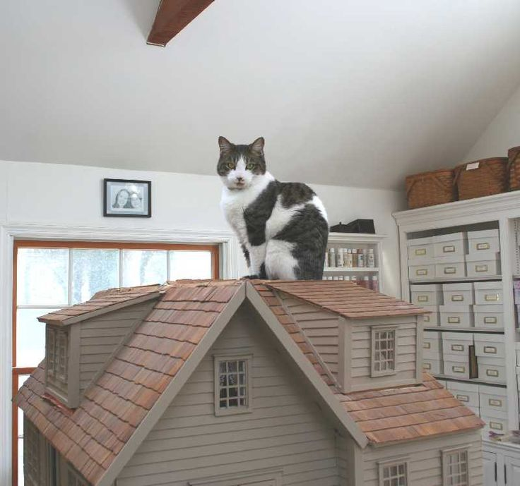 Cats LOVE to sit on top of
