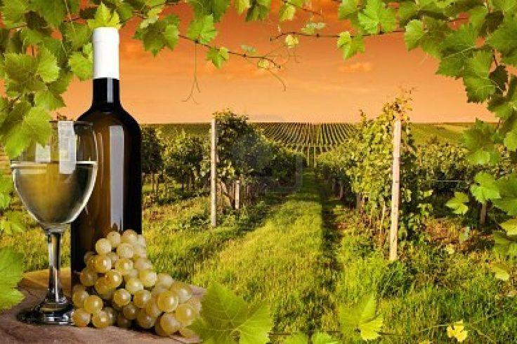 seguros de bodegas, seguros bodegas, seguros para bodegas, seguros de viñedos, seguros para viñedos, seguros viñas, seguros vino, 680755815 o https://www.facebook.com/allianz.seguros.agencia.intueri/
