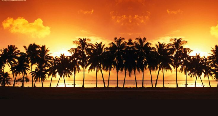 Beach Sunset With Palm Trees Wallpaper Background 1 HD Wallpapers