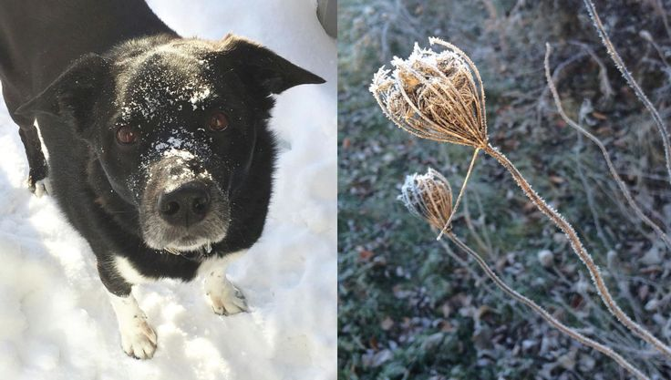 What my dog taught me about happiness  Love Nest Design | http://lovenestdesign.ca