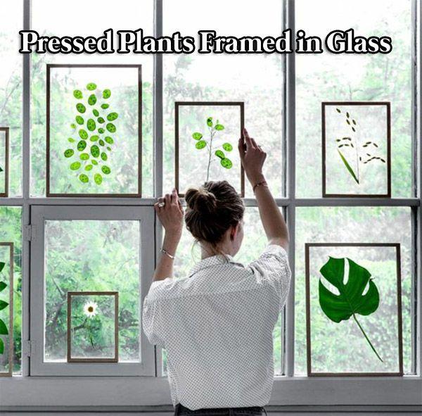 Pressed Plants Framed In Glass Window Decor Diy Window Fall
