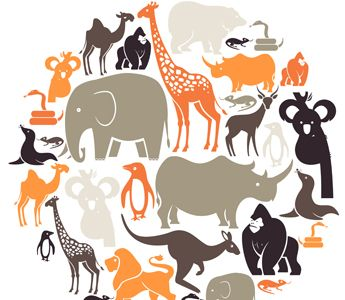 Most children are fascinated by animals and often have an animal that is a particular favorite. This lesson explores the classification system used to identify animals.