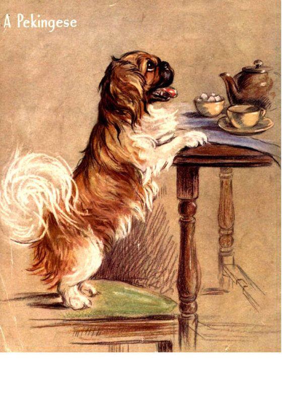 Little Pekingese wants tea, please