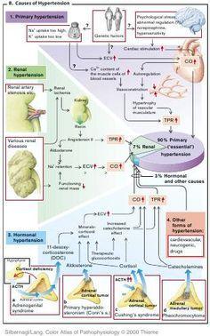 PATHOPHYSIOLOGY OF CARDIOVASCULAR SYSTEM (great heart failure diagrams)