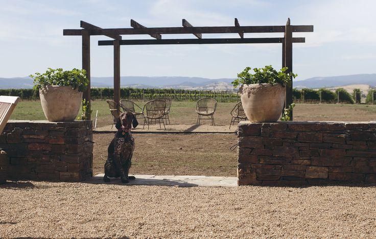 #tuscan #pergola #vineyard #accomodation #sunshine #yarrvalley #stonesoftheyarravalley