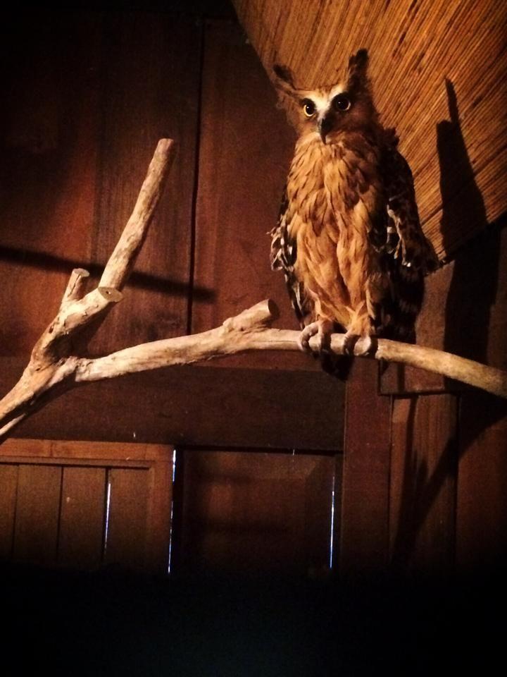 Bird Park - Bali - Best Moment Ever - I love owls!!!