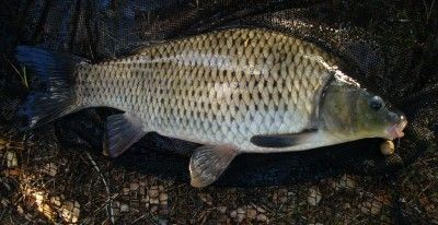 Such a beautiful fish... Foto:Karl Inge S