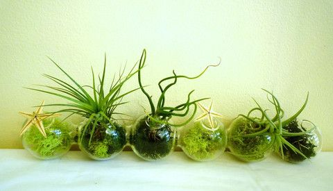 Utsuwa floral design in San Francisco has beautiful arrangements of air plants. Their Japantown store is worth a visit.