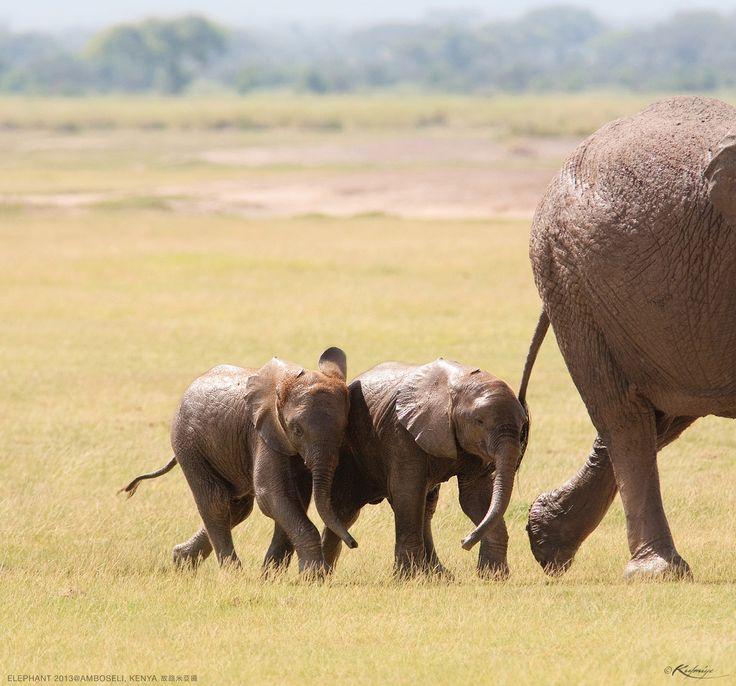 'Always Connected II' - photo by Kulmiye Chan, via 500px;  at Amboseli National Park, Kenya