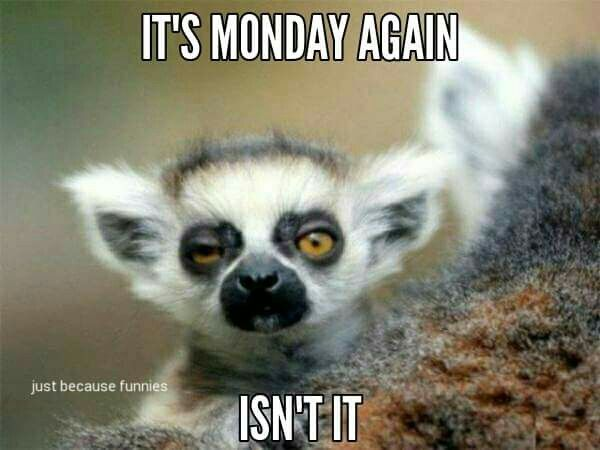 44 best happy monday images on pinterest happy monday buen dia its monday thecheapjerseys Gallery