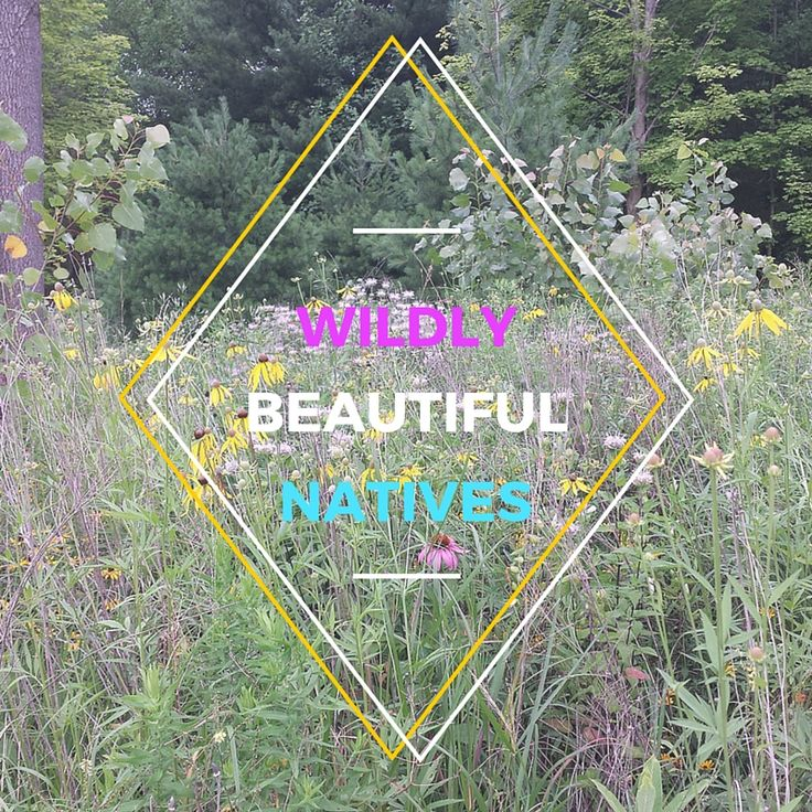 Indiana Native Plants: 157 Best Southern Indiana Nature & Scenery Images On