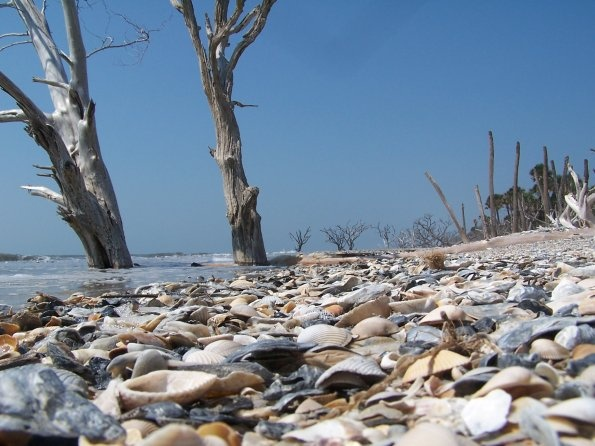 Botany Bay - Edisto Island, SC. The most amazing beach with unbelievable shells.