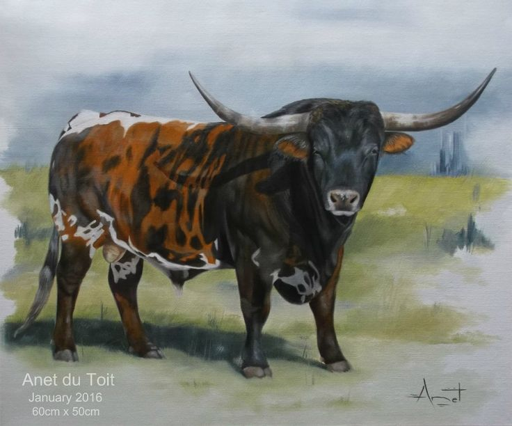 Texas longhorn Oil on canvas 60cm x 50cm SOLD