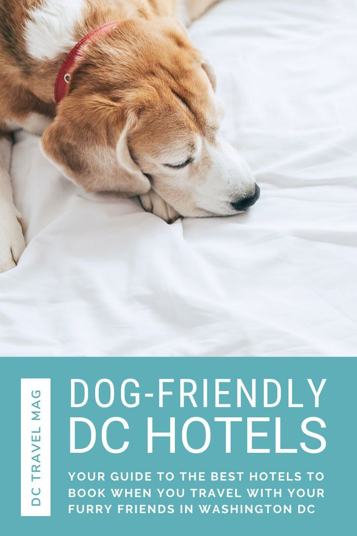 10 Best Pet Friendly Hotels In Washington D C Traveling By Yourself Road Trip Fun