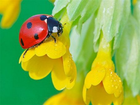 wonderful contrast.  wonderful detail.Positive Inspiration, Red, Quote, Inspiration Pictures, Ladybugs, Lady Bugs, Black, Yellow Flower, Cameras