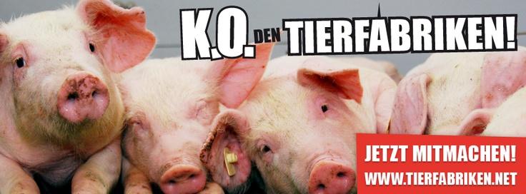 K.O. den Tierfabriken! Kampagne des BUND. www.tierfabriken.net   #Tiere #Massentierhaltung #Antibiotika #Schweine #Hühner #Tierschutz