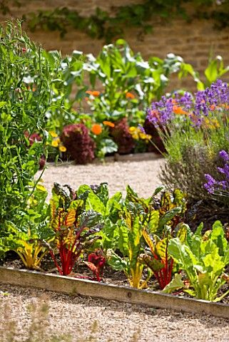Potager (ornamental vegetable/kitchen garden) Whatley Manor, Cotswolds