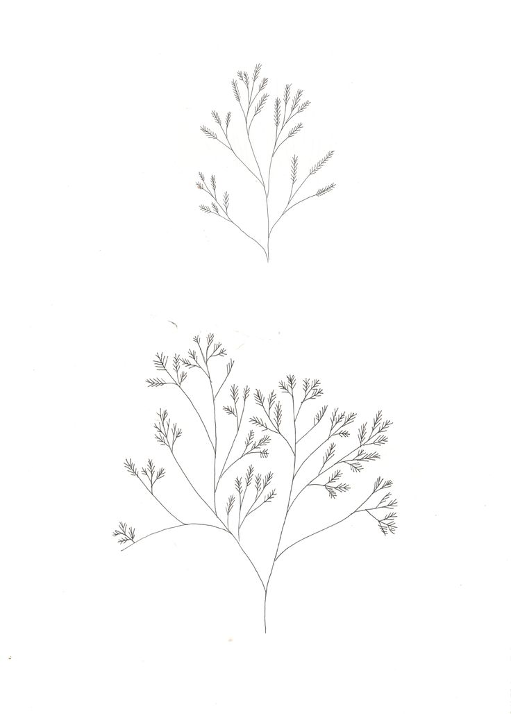 Plants of the ocean. | Katt Frank