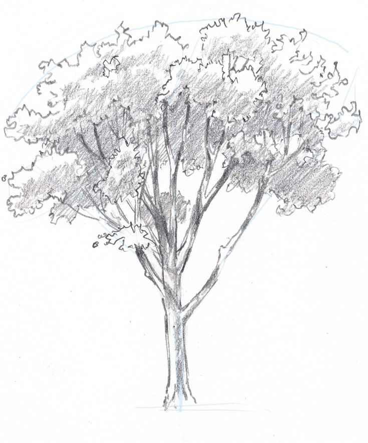 learn how to draw trees in this simple step by step demonstration of the process of