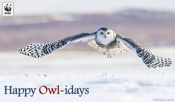 holiday ecard owl-idays