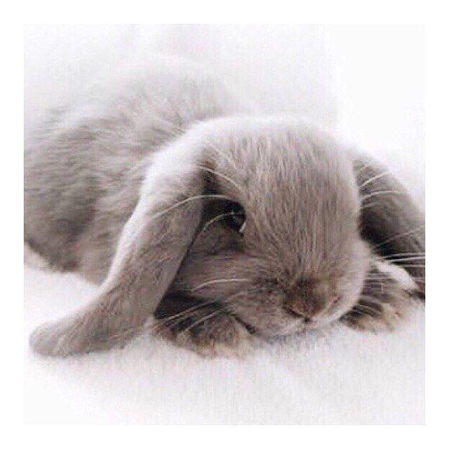 H A P P Y E A S T E R Hope You Have A Relaxing Long Weekend X Weekend Easter Longweekend Goodfriday Easterb Happy Cat Pet Names Cute Animals