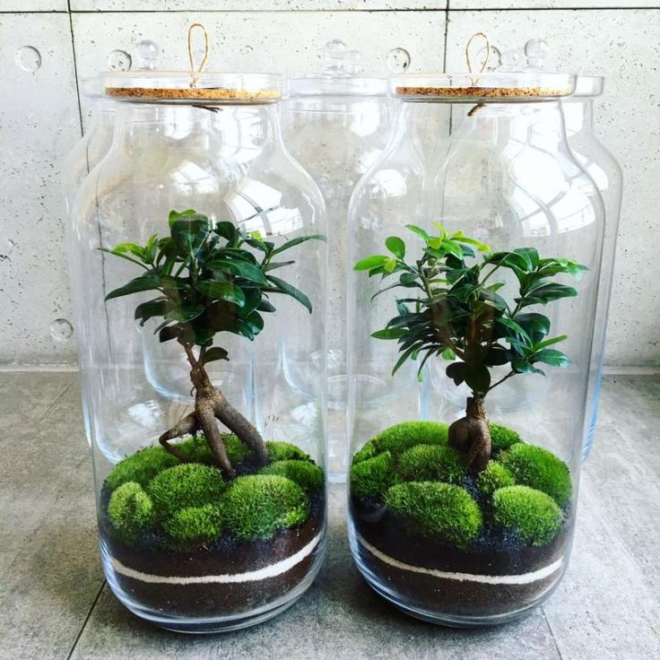 Les 7 meilleures images à propos de Plants sur Pinterest Crevette - petit jardin japonais interieur