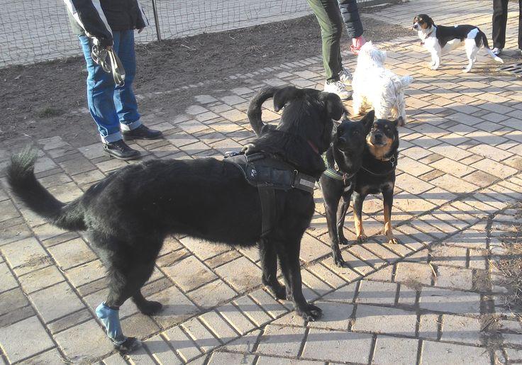 19/02/2016 - Torino con Peja, Zorba, Axel e Lea