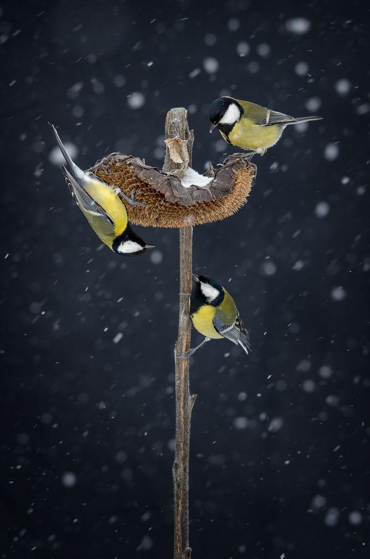 Трио — National Geographic Россия