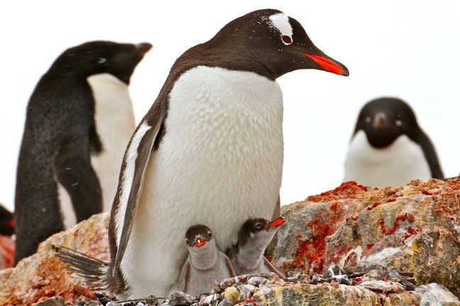 7 best Antarctica images on Pinterest | Antarctica ...