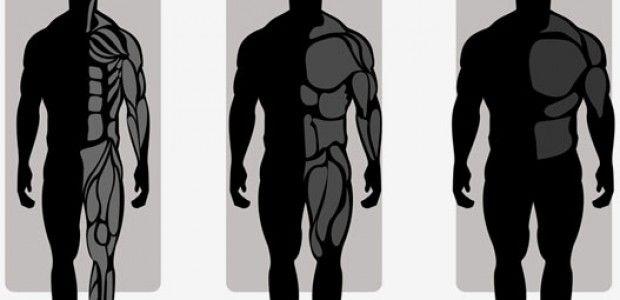 Vücut Tipleri Hakkında Geniş Bilgi (Beslenme-Antrenman)