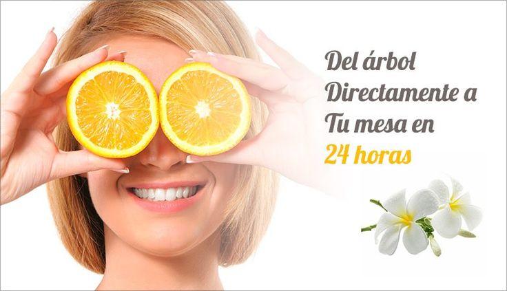 http://www.comprarnaranjasadomicilio.com/ - Naranjas a Domicilio  Naranjas recién recolectadas 100% naturales, del árbol a la mesa en 24 horas, compra online. #fruta, #salud, #bienestar, #comercio, #natural, #comprarnaranjasadomicilio