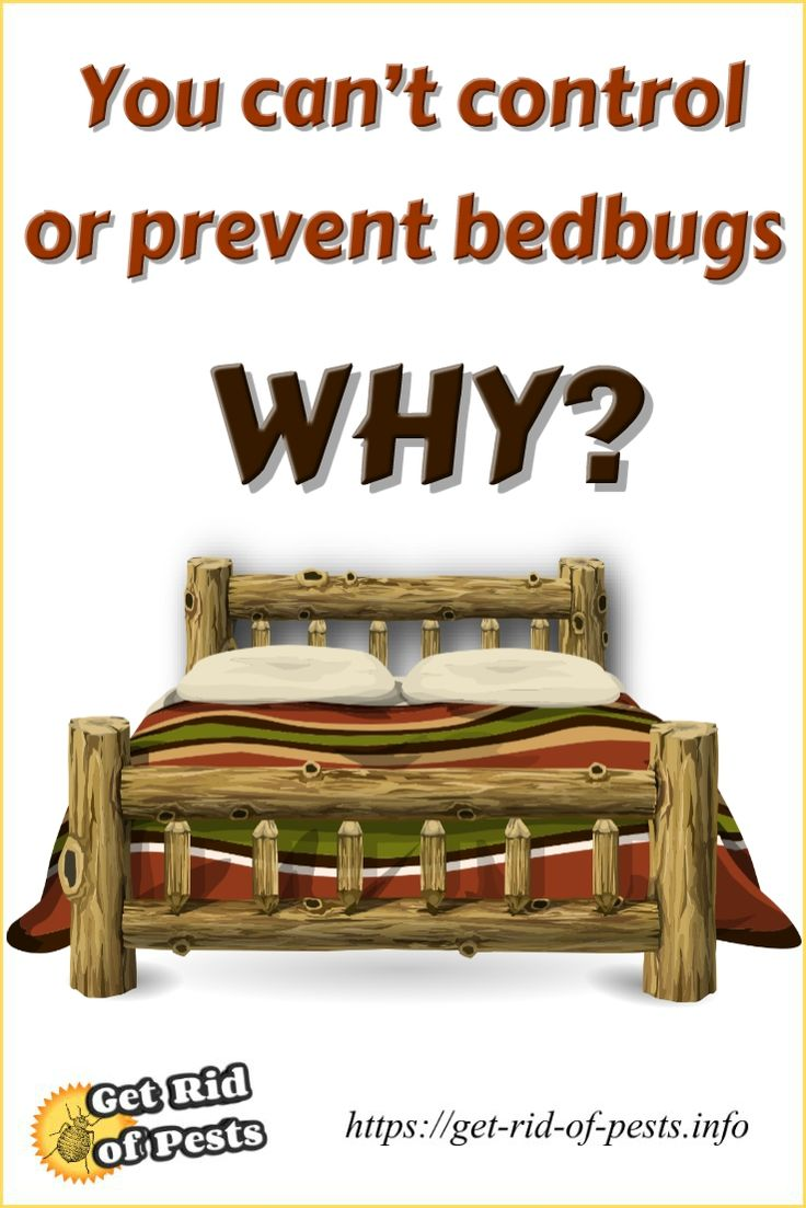 23 best bed bug exterminator images on pinterest bed bugs