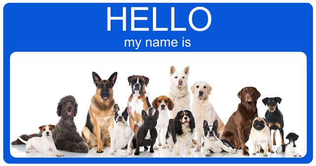 Dog's World and Encyclopedia: Female Dog Names | Attractive Names