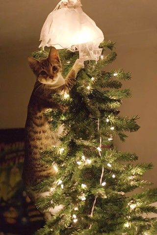 """""""Sto solo sistemando l'albero""""."""