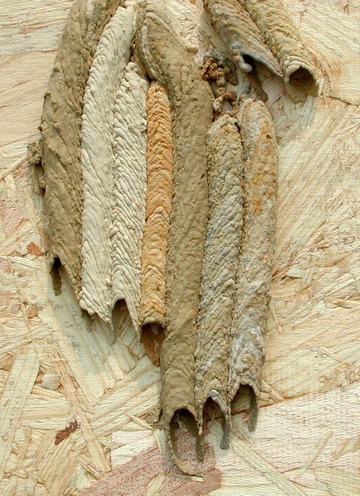 Beige | Ecru | Cream | Taupe | ベージュ | бежевый | Bēju | Colour | Texture |  organ pipe wasp nest