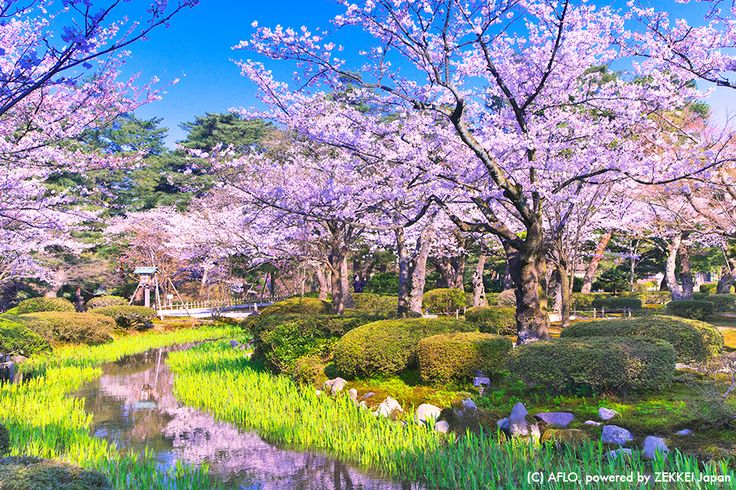 The Hokuriku Shinkansen connecting Tokyo and Ishikawa Prefecture will open on March 14th. This is a must visit place in Ishikawa, and it is about to become very easily accessible! Let's go see the cherry blossoms #cherryblossoms #Kenrokuen