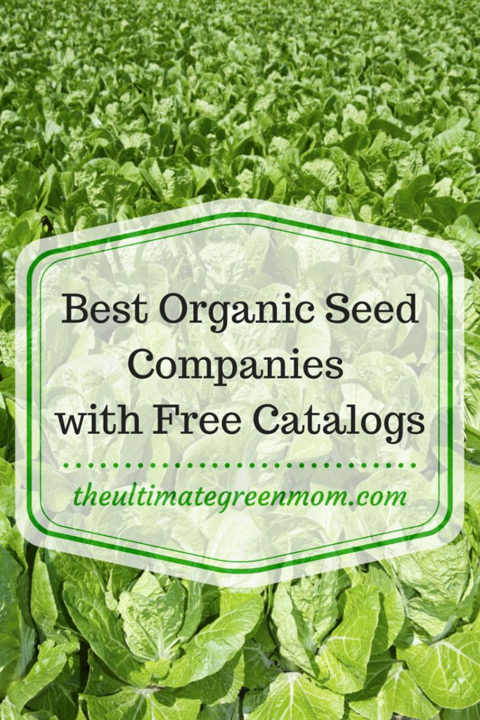 The best organic seed companies with free catalogs | The Ultimate Green Mom #garden