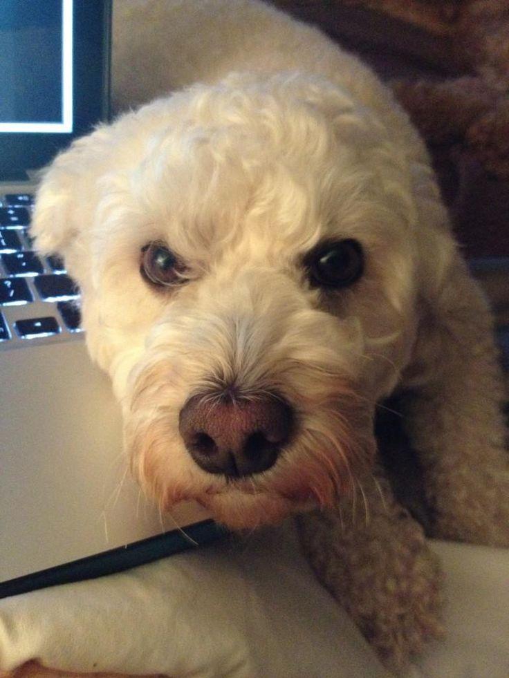Lena Dunham Dog Names