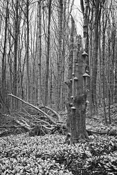 bwstock.photography - photo | free download black and white photos  //  #tree #trunk