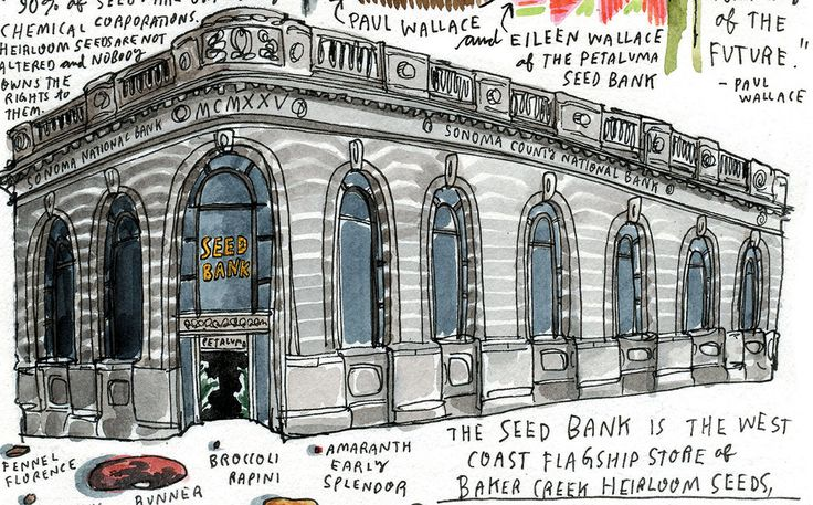 Illustrator Wendy MacNaughtonvisited the Petaluma Seed Bank,establishedin 2009 in a building that was once California's Central Bank.